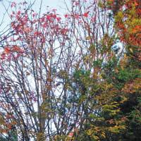 19-11-15 季節風