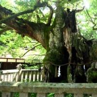 <大山祗神社> 悠久の歴史を物語るクスノキの巨樹群