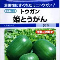 冬瓜の種まき