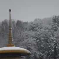 寒中に春の淡雪 2020.1.18