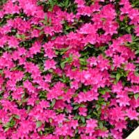 ★花で季節の移ろいを感じ・・・