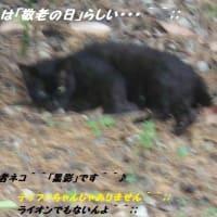 ライオン一頭の価格が10万円になってるって??