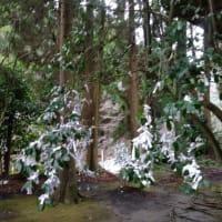 冠嶽神社、おみくじの花