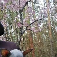 小次郎&ツイギ―16歳!バンビ14歳!