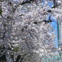 こっそりお花見ランチ〜3〜