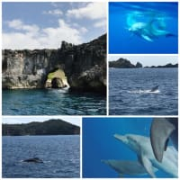 日本で1番遠い島、小笠原諸島〜イルカ、クジラ、南島~