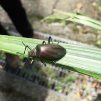 虫観察 埔里の裏山へ。≪注意:虫の写真あり!≫