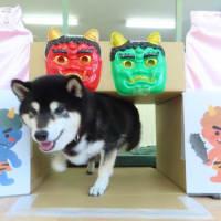 2月のパピーパーティー開催について & 幼稚園体験に来てくれた【むぎくん】 犬のしつけ教室@アロハドギー