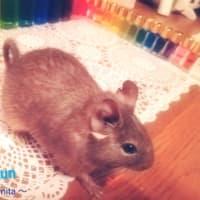 ネズミ年もゆるりとよろしくお願い申し上げます♪(=^・^=)