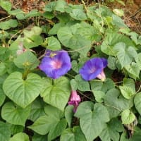 冬にかけ増加、心筋梗塞 入浴時など「寒暖差」注意/ツツジ、サツキ、シャクナゲなど鉢植えの植え付け