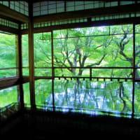 色んな風景~京都・瑠璃光院~