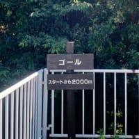 秋ヶ瀬緑道ウォーキング