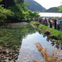豆柴日記 ~GWキャンプ 板取川温泉オートキャンプ場~