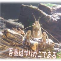 水辺のレクチャー魚獲りガサガサ💖これもボランティア!&和の水槽&シシャモアートと相撲~?(笑)