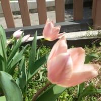 咲いてる!(>_<)