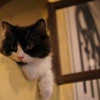 猫カフェ「猫家」ボール猫 in 川越