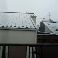 お清めの「なごり雪」を期待