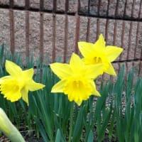 札幌も春です!