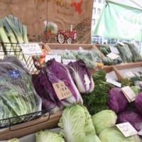 今年も紫白菜(^ω^)・・・