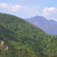 アケボノ咲く西赤石山3