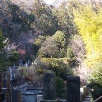 鎌倉を西から東へ梅見物(1);葛原岡神社・源氏山公園を経由して川喜多映画記念館へ