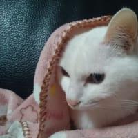 右耳掛けモフモフ毛布顔出しの技ニャう。