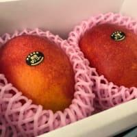 やっとマンゴーが発送できる!