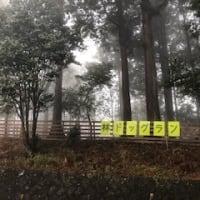箱根は今日も霧深い模様です。