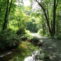 「病は気から」ステップ 26.自然の中を歩く