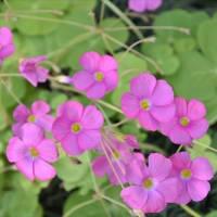 庭の花 (No 2322)