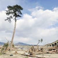 東日本大震災…奇跡の一本松