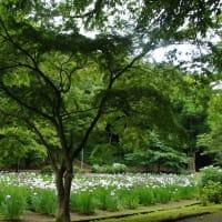 ✿ 菖蒲園 ✿