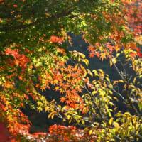 成田山公園の紅葉(ヨコ構図)