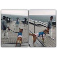 東京湾に浮かぶパーキングエリア