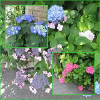 花の植え替えとツリガネソウ