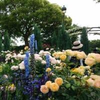 花々に囲まれての巻