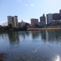 旧中川の水辺は都会のオアシス          旧中川河津桜シリーズその3/全5回