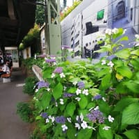 シャンソン歌手リリ・レイLILI LEY 音楽の館 ランの花達が歌う部屋