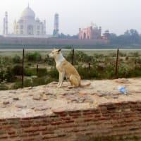 不思議の国インド 5