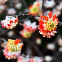 花シリーズ・珍無類花