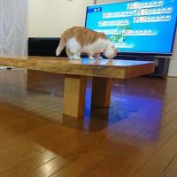 せんのテーブル
