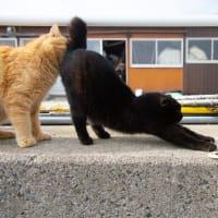熊本県上天草市にあるネコの島と名高い「湯島」で 日帰りネコ撮影会が開催されます!