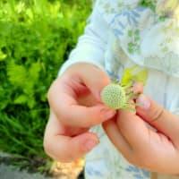 【レポート】新緑の森で野草を味わうリトリート