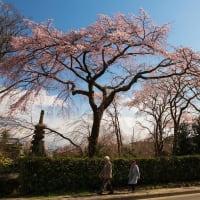 2019年春の京都・平安郷の壁紙(計49枚)