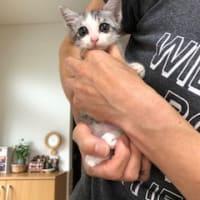 子猫のカイちゃんトライアルに入りました