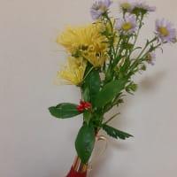 美しい嵯峨菊!