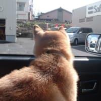 ドライブ日和♪