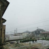 まさかの雪!!