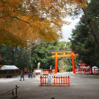 下鴨神社の紅葉 表参道見頃続き