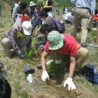 ◆◆フォーラムin足尾~植樹ボランティア活動に参加しています~◆◆